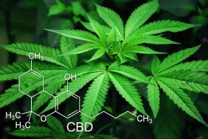 fleur de cannabis